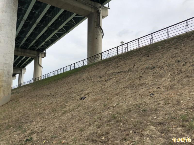 新北市新莊區五工一路台64線下方堤坊邊坡植栽因光照等因素,植披無法順利生長,泥沙也無法固著。(記者周湘芸攝)