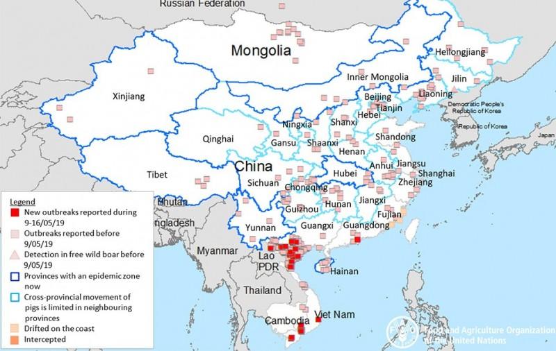 中國管控不住非洲豬瘟,導致鄰國紛紛淪陷,亞洲各國莫不嚴陣以待。紅點為新出現的疫情,淡粉點為過去疫情。(圖擷自聯合國糧食及農業組織網站)