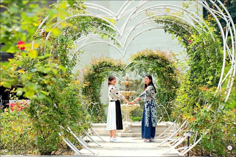 雅聞七里香玫瑰森林入口處的宮廷玫瑰區設有心型廊道和古典噴水池,是許多人到此必拍的名景。(記者陳宇睿/攝影)