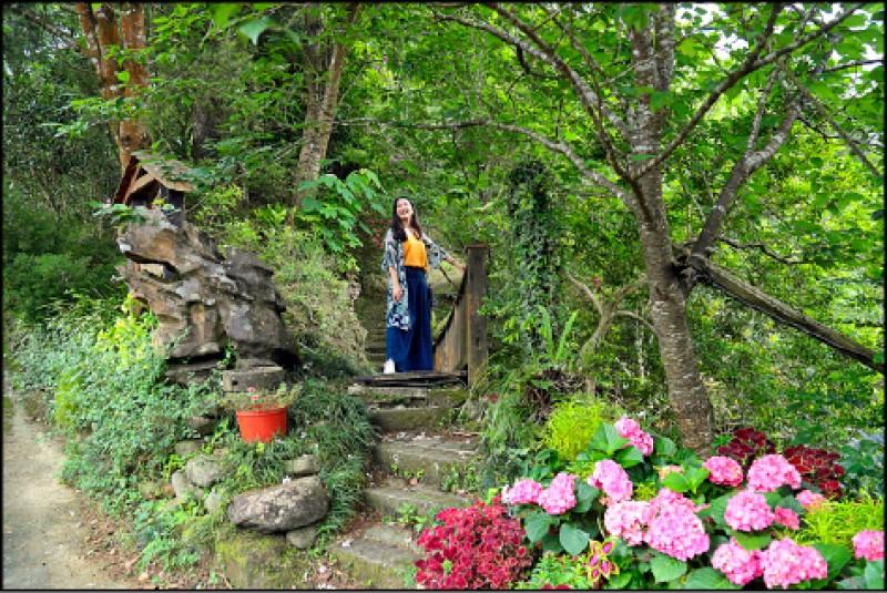 杉林松境園內綠意盎然,且有許多木徑小道,除了賞繡球花也可以在園內到處走逛,5、6月的晚上還能賞螢火蟲。(記者陳宇睿/攝影)