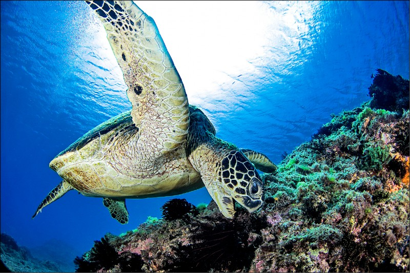 減少垃圾的使用,才能讓地球和海洋有更乾淨美好的未來。(島人海洋文化工作室提供)