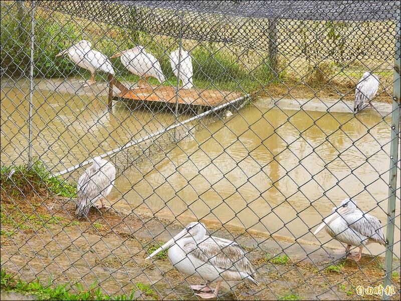 游家富自幼愛鳥,目前園區內已飼養多種鳥類。(記者佟振國攝)