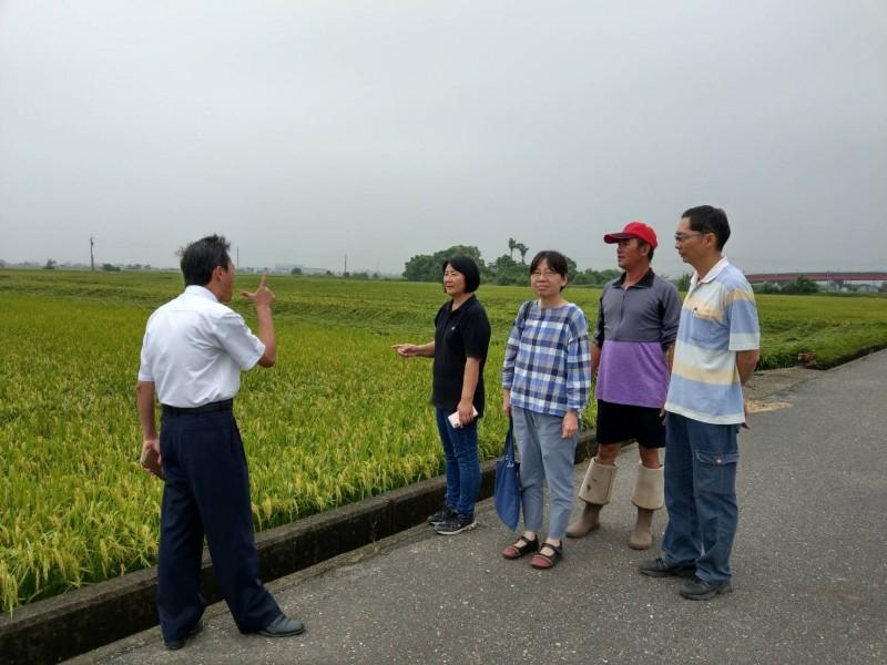 520強降雨造成稻作多處傳出倒伏,南市農業局、公所與農民前往田區勘查。(圖由南市農業局提供)