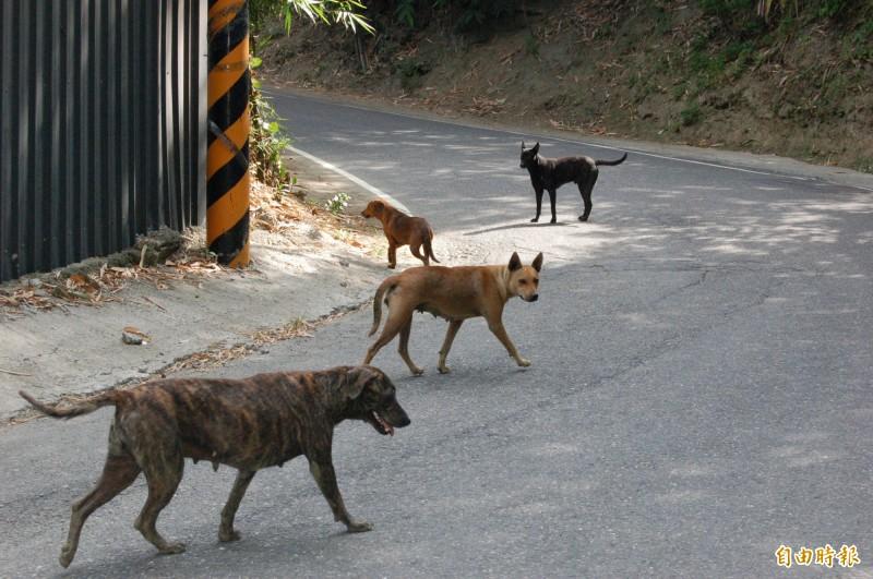 有民眾在公共政策網路參與平台上,提案要求流浪狗全面安樂死,引發網友們正反論戰。(記者張聰秋攝)