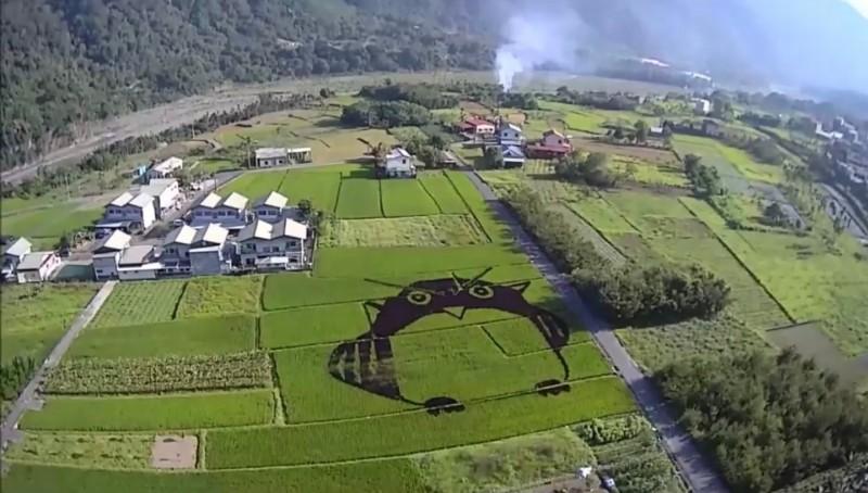 仁愛鄉中原部落今年首度嘗試稻田彩繪,融入傳統神話,以巨幅Q版貓頭鷹為主題。(圖由中原社區理事長張大偉提供)