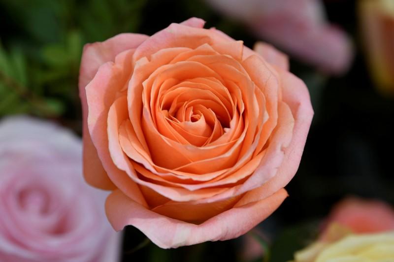美國男子下班回家時,發現家裡曾被人入侵過卻沒有遺失任何物品,家裡還被打掃乾淨甚至擺放了摺紙玫瑰。玫瑰示意圖。(路透)