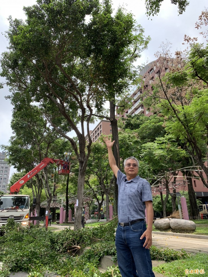 楊國禎建議修剪路樹高度應改善。(記者蔡淑媛攝)