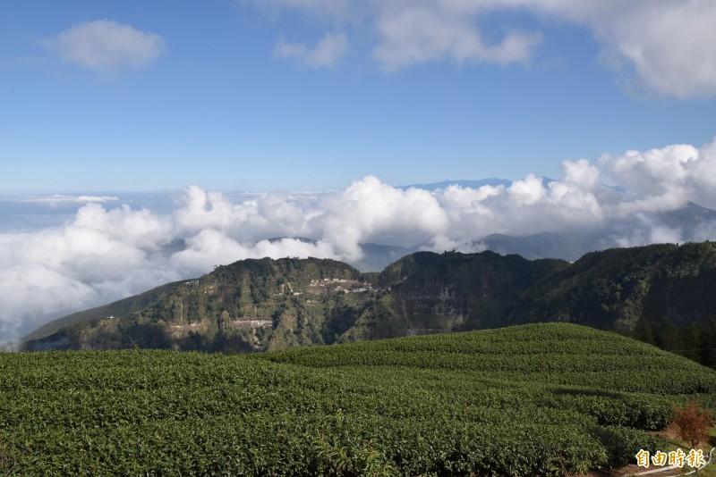 雲林草嶺石壁雲嶺之丘可眺望茶園、雲海景觀。(記者黃淑莉攝)