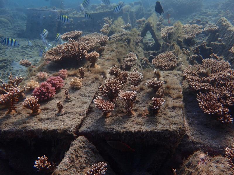 歷經3年斥資300萬元,打造的全台首座人工珊瑚海洋花園。(澎湖縣種苗繁殖場提供)