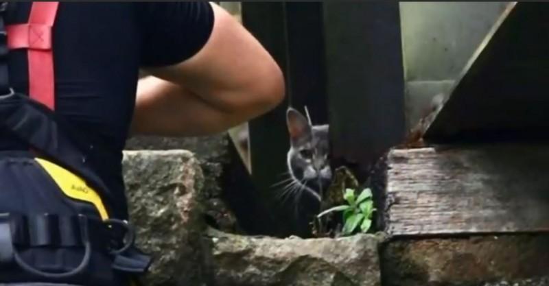 英國貓咪哈蒂(Hatty)困在鐵路橋上,消防員嘗試營救但無法救出,怎知最後牠竟自行走回家。(圖擷自「Mark 1333」YouTube)