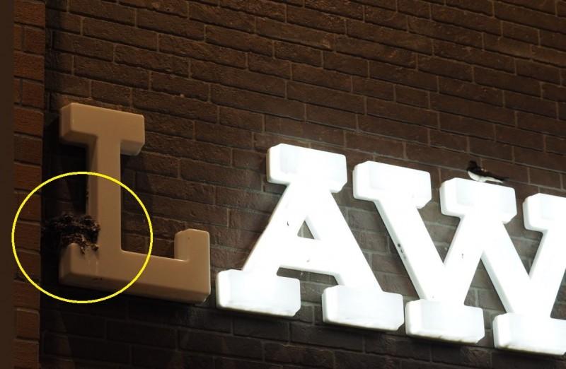 招牌「L」字不亮暖心原因曝光,原來是有燕子在上頭築巢。(圖擷自推特)