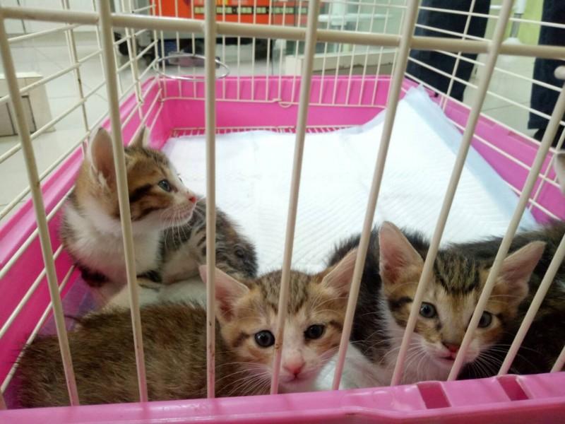 動保處指出,新北自2015年5月以來,已成立37間愛心認養小棧,為2927隻寵物找到家。(新北市動物保護防疫處提供)