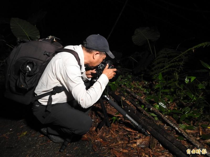 國姓鄉南港村的竹林內發現螢光蕈,也吸引愛好攝影人士前來取景。(記者佟振國攝)