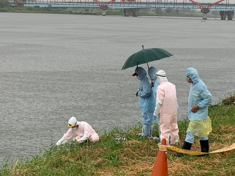 東港溪昨天驚現四足動物浮屍,海巡人員不敢大意,所幸經判斷為犬屍,虛驚一場。(記者陳彥廷翻攝)