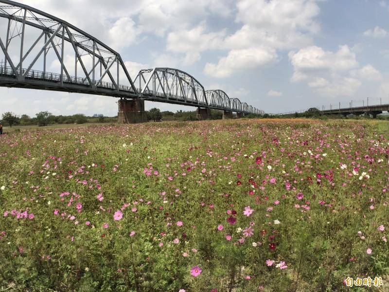 國慶煙火預計在高屏溪舊鐵橋屏東端施放。(記者羅欣貞攝)