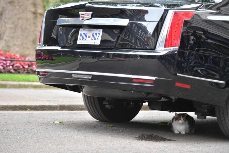 英國首相官邸的首席捕鼠官、英國第一貓「賴瑞」(Larry)溜進川普座車底下,令車輛動彈不得。(法新社)