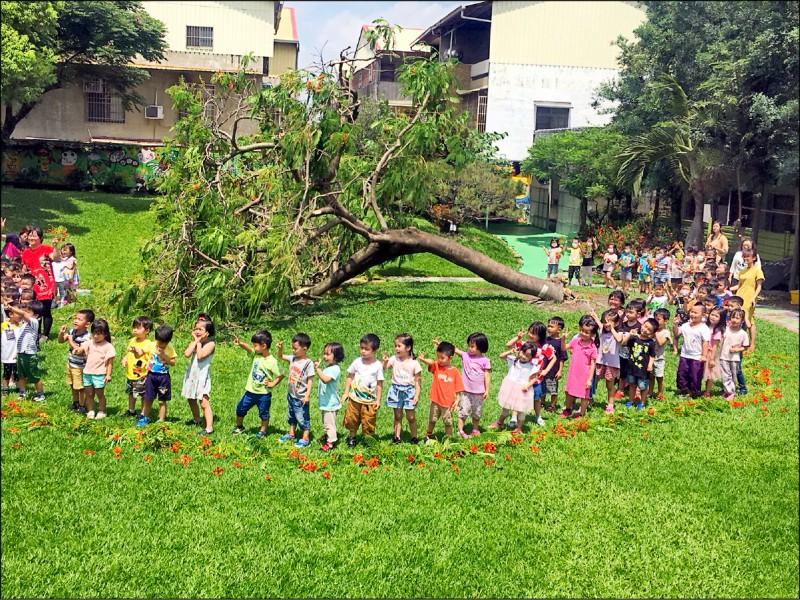 小朋友圍成一圈向死去的鳳凰木致哀。(記者顏宏駿攝)