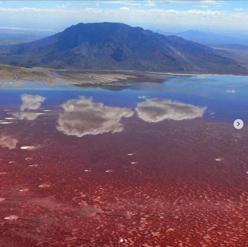 納特龍湖湖水含有強鹼,只要生物一進到湖中,很快就會鈣化。(圖擷取自IG @zkaribu)