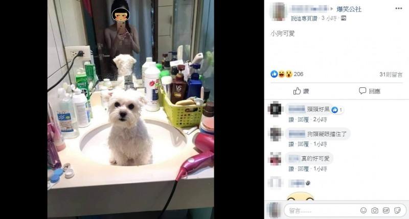 網友們認為,畫面中的小狗相當可愛。(圖擷取自爆笑公社)