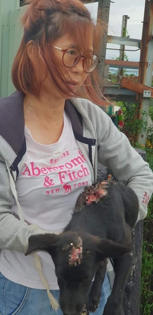 高雄市關懷流浪動物協會理事長王小華救出3個月「大餅」,身體大面積燒燙傷,慘不忍睹。 (高雄市關懷流浪動物協會提供)