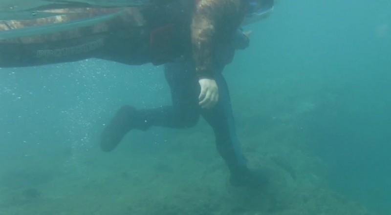 潛客重踩綠蠵龜,犯行全都錄。(記者陳彥廷翻攝)