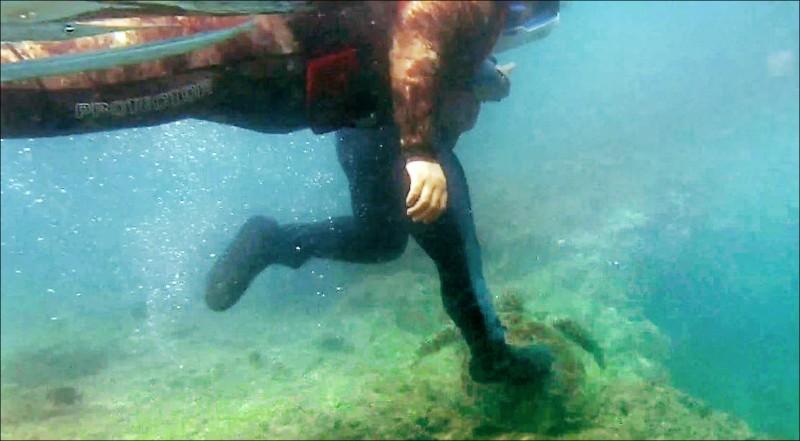 小琉球浮潛客重踩綠蠵龜,犯行全都錄。(記者陳彥廷翻攝)