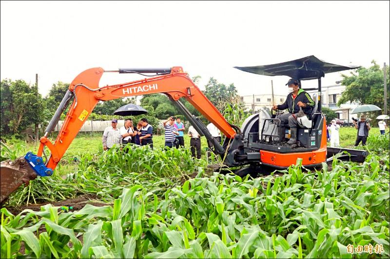 怪手到宜蘭縣頭城玉米田內開挖,受感染玉米全數就地掩埋。(記者林敬倫攝)