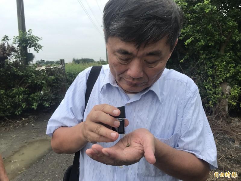 農業處官員再三確認是否為「秋行軍蟲」。(記者顏宏駿攝)