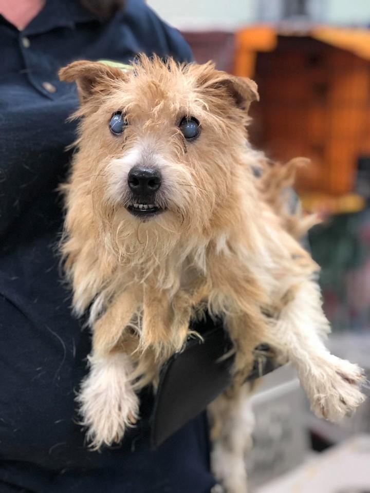 美國紐澤西州警方與動保協會合作,11日從一戶住宅內共救出188隻狗,這些犬隻生活環境髒亂,多數身體不健康,有些還懷孕。(翻攝自「Monmouth County SPCA」官網)