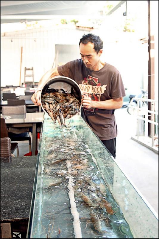 老闆每天都會補上新鮮的泰國蝦給客人品嚐。(記者沈昱嘉/攝影)