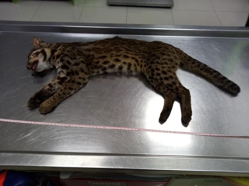 拯救傷亡野生動物引誤會 苗縣府再聲明