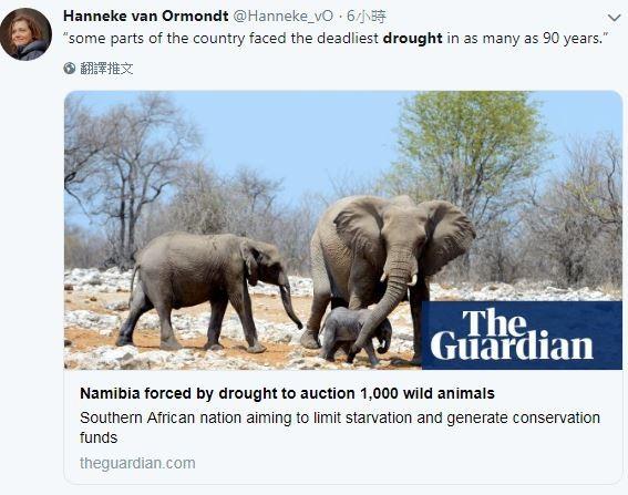 今年乾旱嚴重,位於非洲西南部的納米比亞宣布將出售1000隻野生動物。(圖擷取自推特,截圖為英國衛報畫面)