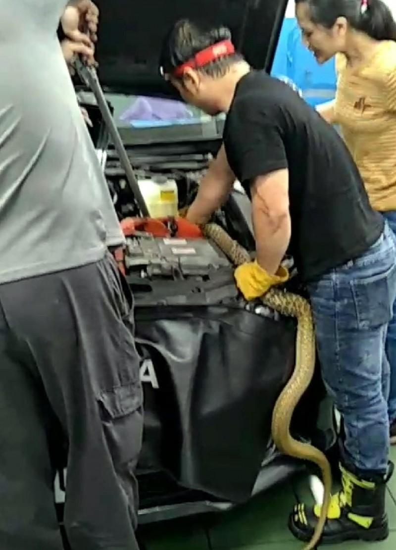 修車廠人員利用工具拆開轎車部分零件後,將「臭青母」拖拉出來情形。(記者謝介裕翻攝)(記者謝介裕攝)