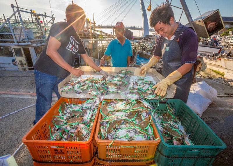 新北市農業局表示,新北萬里蟹產量佔全國七成以上。(新北市農業局提供)