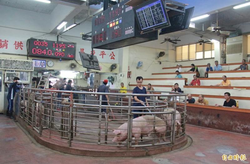 彰化肉品市場6月以來每日拍賣頭數約1500~1600頭,比往年減短2至300頭,平均拍賣價是近5年新高。(記者陳冠備攝)