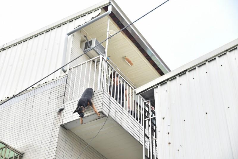 嘉義市動物守護協會今接獲通報搶救,黑狗吊在半空已經死亡。(嘉義市動物守護協會提供)