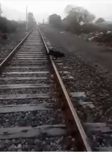 狗狗被綁在鐵軌上。(圖擷取自臉書)