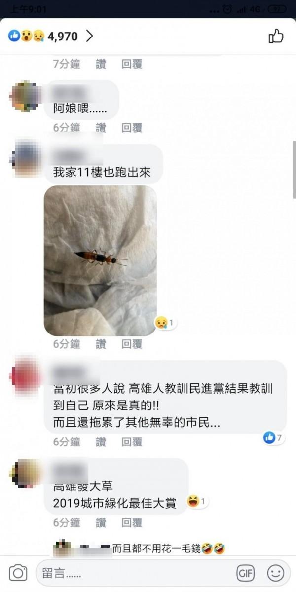 高雄市區傳出「隱翅蟲」大量出沒。(記者黃佳琳翻攝)