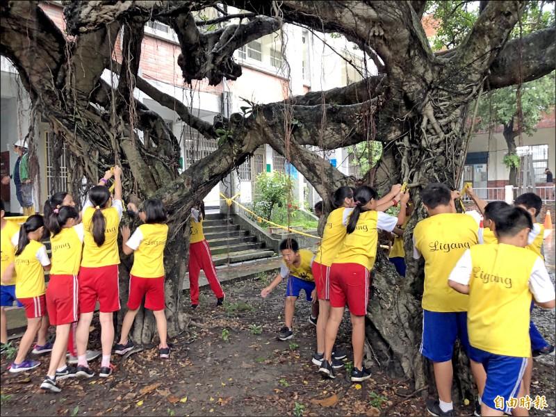 里港國小學生繫黃絲帶,為染上褐根病的老樹爺爺祈福。(記者羅欣貞攝)