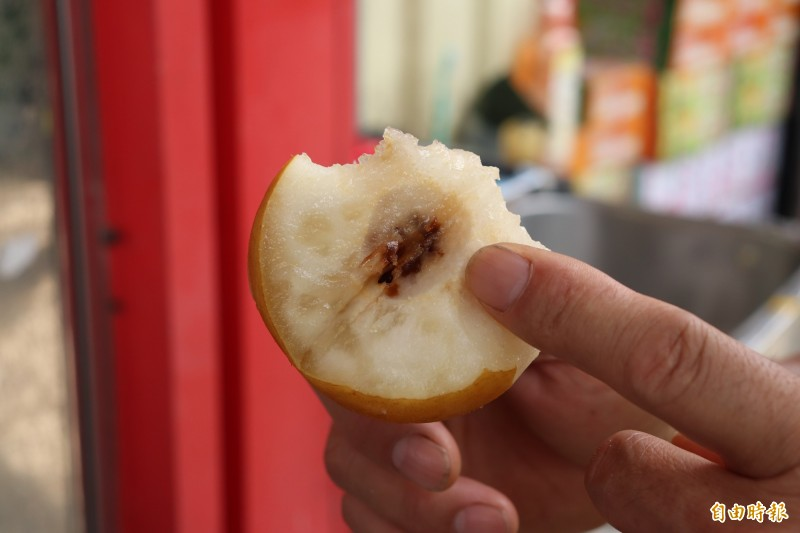 今年梅雨季雨量是歷年最多,導致不少成熟的梨子,梨心因為過度潮濕腐爛。(記者林敬倫攝)