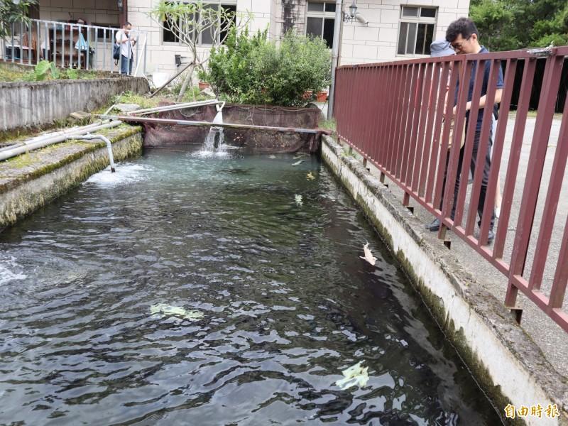 魚之鄉餐廳前有賞魚步道,民眾可觀賞不同鱘龍魚。(記者歐素美攝)