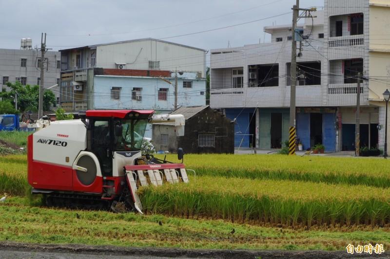 雲林縣已有49件稻作獲得理賠。(記者林國賢攝)