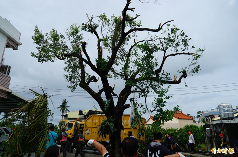 龍捲風破壞力驚人,居民說,這棵樹原本很茂密,卻直接被「剃頭」,只能說沒有欄腰斷已是萬幸。(記者陳彥廷攝)