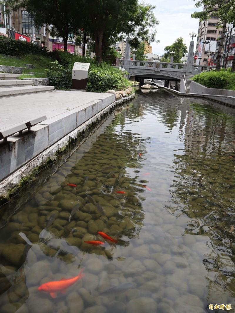 綠川景觀河道日後恐看不到魚兒在水中悠游。(記者歐素美攝)