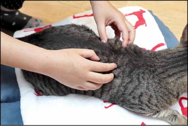 利用指尖按摩的「梳撫」手法是毛小孩最能接受的按摩手法。(記者陳宇睿/攝影)