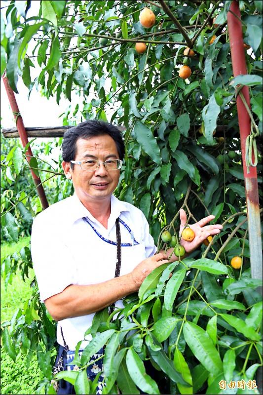農友龔泰安表示,黃金山竹能適應高溫多雨氣候,極具市場潛力。(記者邱芷柔攝)