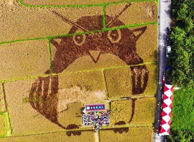 中原部落貓頭鷹彩繪稻田收割了,俟收割完貓頭鷹也飛走了。(水保局南投分局提供)
