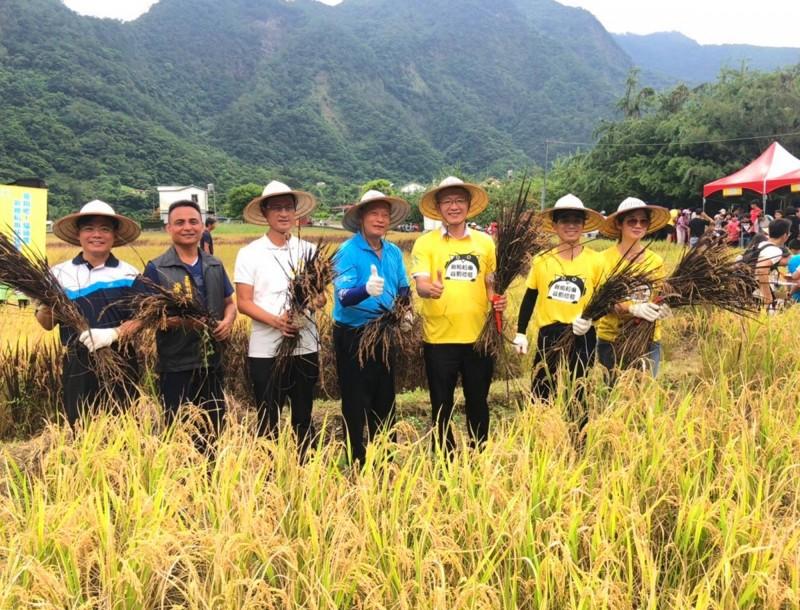 水保局與部落廚房人員一起下田收割。(水保局南投分局提供)