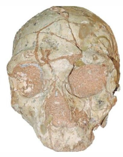 「Apidima1」成為歐洲最古老的現代人類化石。(擷取自《Natural》)