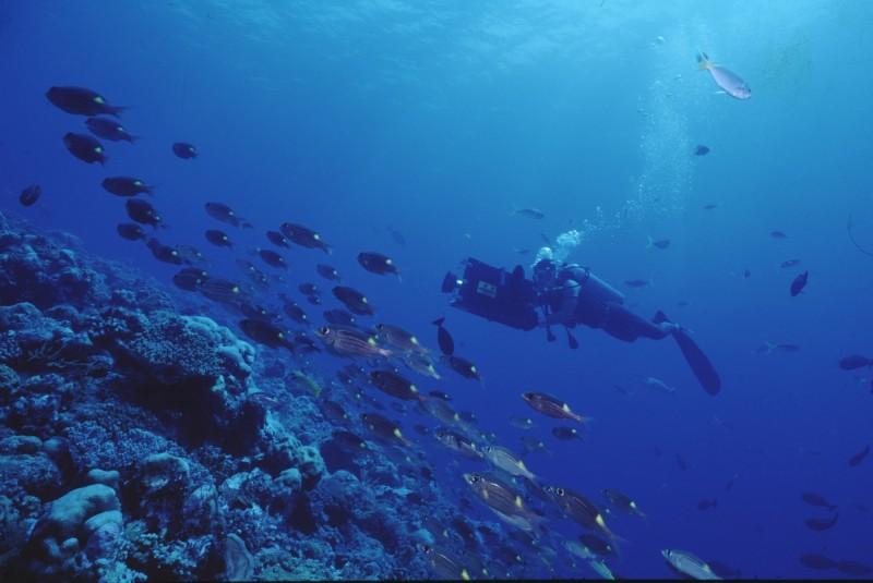 「台灣的潛水教父」蘇焉進行水下攝影。(國立海洋科技博物館提供)